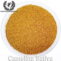 Camelina Sativa