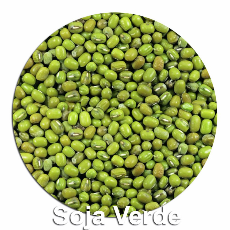 Semilla de Soja Verde