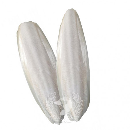 Hueso de Sepia bolsa con 2 unidades para pájaros (Talla GIGANTE)