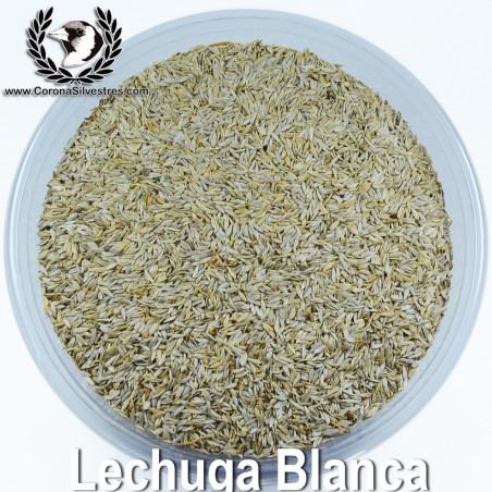 Semilla de Lechuga Blanca