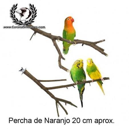 Percha de Naranjo 22 cm