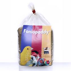 FonioPaddy Semilla...