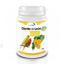 Diente de León -  ForteBird...