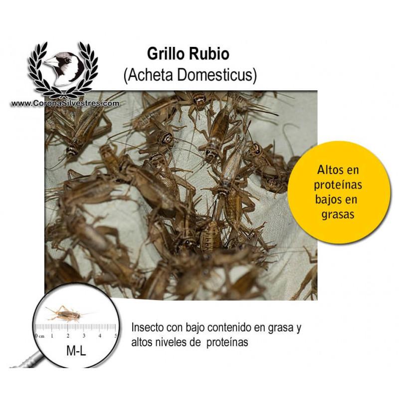 Grillo Rubio M-L ración 10g