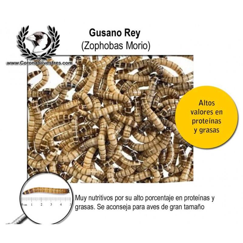 Gusano Rey (Zophofa Morio) 50g