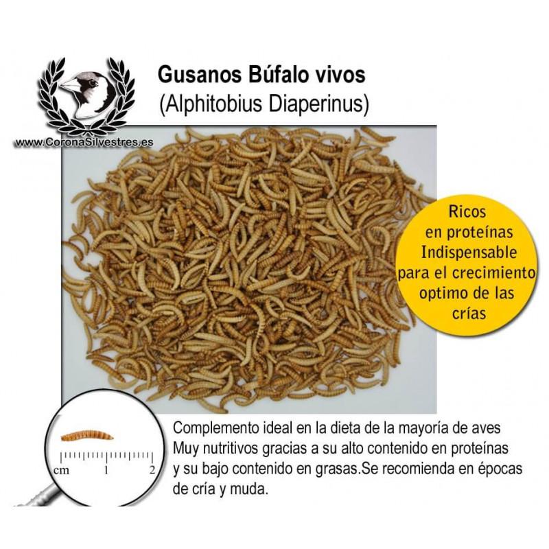 Gusano Búfalo (Alphitobius diaperinus) 30g