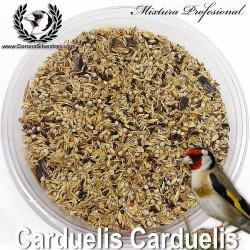 Carduelis Carduelis + Chia