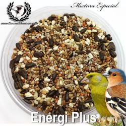 Energi Plus