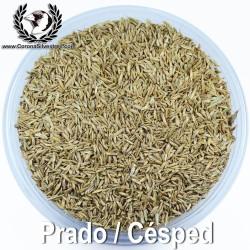 Prado / Césped