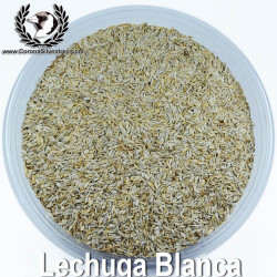 Lechuga Blanca