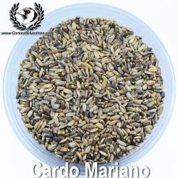 Cardo Mariano Semilla