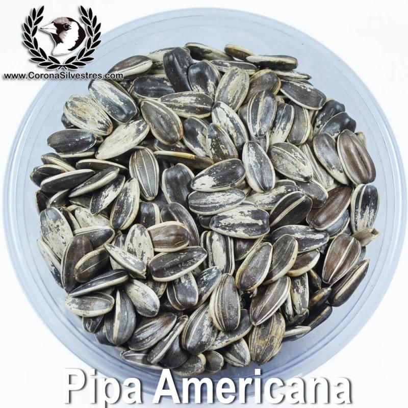 Pipa Americana natural