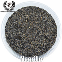 Negrillo