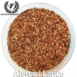 Semilla de Alerce / Larice