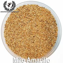Mijo Amarillo