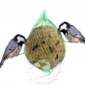 Bolas de Sebo / Grasa para pájaros