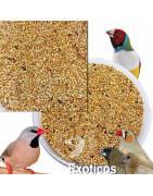Mixtura para Pájaros Exóticos